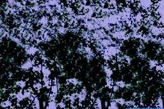 Θολωμένη περίληψη εικόνα του υποβάθρου φυλλώματος δέντρων Στοκ Εικόνα