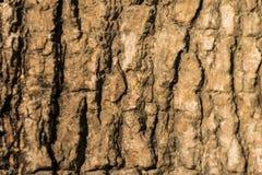 Θολωμένη σύσταση φλοιών Στοκ εικόνα με δικαίωμα ελεύθερης χρήσης