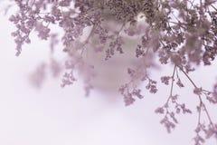 Θολωμένος των ξηρών ρόδινων λουλουδιών στοκ φωτογραφίες