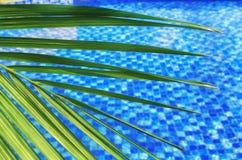 θολωμένο αφηρημένο θερινό υπόβαθρο, ηλιόλουστη ημέρα στο τροπικό κλίμα, φύλλο φοινικών στο υπόβαθρο της μπλε λίμνης νερού στοκ φωτογραφία με δικαίωμα ελεύθερης χρήσης