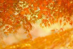 Θολωμένο ζωηρόχρωμο υπόβαθρο με τα φύλλα φθινοπώρου στοκ φωτογραφία