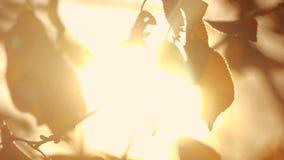 Θολωμένο πτώση υπόβαθρο  απόθεμα βίντεο