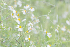 Θολωμένα αφηρημένα λουλούδια υποβάθρου στο λιβάδι Στοκ Εικόνες