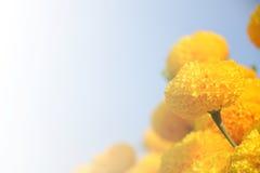 Θολωμένα κίτρινα λουλούδια για το υπόβαθρο Στοκ εικόνα με δικαίωμα ελεύθερης χρήσης