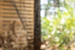 Θολωμένα ξύλινα slats και δέντρο Στοκ εικόνες με δικαίωμα ελεύθερης χρήσης