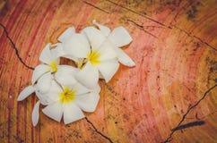 Θολωμένα λουλούδια: Γλυκά λουλούδια Plumeria (frangipani) στον πίνακα Στοκ Εικόνες
