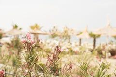 Θολωμένα λουλούδια και υπόβαθρο παραλιών Αφηρημένος όμορφος κόλπος θαμπάδων με την ομπρέλα και καρέκλα στη θάλασσα και την παραλί Στοκ φωτογραφία με δικαίωμα ελεύθερης χρήσης