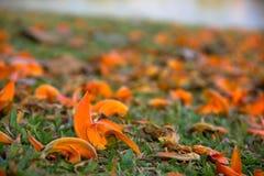 Θολωμένα πορτοκάλι λουλούδια στο υπόβαθρο Στοκ εικόνες με δικαίωμα ελεύθερης χρήσης