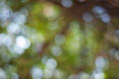 Θολωμένες φύλλα και φύση bogeh Στοκ Εικόνες