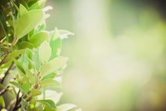 Θολωμένη περίληψη ανασκόπηση λουλουδιών Στοκ εικόνες με δικαίωμα ελεύθερης χρήσης
