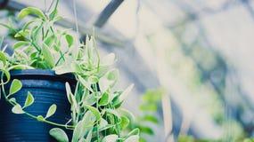 Θολωμένη περίληψη ανασκόπηση λουλουδιών Στοκ Φωτογραφίες