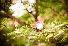 Θολωμένη περίληψη ανασκόπηση λουλουδιών Στοκ Εικόνες