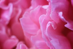 Θολωμένη περίληψη κινηματογράφηση σε πρώτο πλάνο λουλουδιών υποβάθρου peony Στοκ φωτογραφία με δικαίωμα ελεύθερης χρήσης