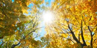 Θολωμένος ήλιος φθινοπώρου στο ηλιοβασίλεμα Στοκ Φωτογραφίες