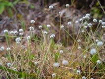 Θολωμένος τομέας λουλουδιών χλόης Στοκ φωτογραφία με δικαίωμα ελεύθερης χρήσης
