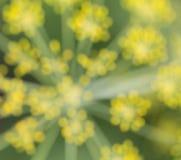 Θολωμένο αφηρημένο πράσινος-κίτρινο υπόβαθρο, θολωμένος άνηθος Στοκ Εικόνες