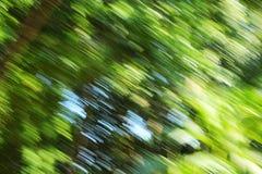 Θολωμένο ελαφρύ δάσος - ομορφιά υποβάθρου Στοκ Φωτογραφίες
