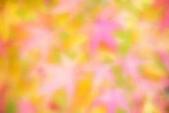 Θολωμένο ιαπωνικό υπόβαθρο σφενδάμνου Στοκ φωτογραφία με δικαίωμα ελεύθερης χρήσης