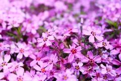 Θολωμένο πορφυρό floral υπόβαθρο Στοκ φωτογραφία με δικαίωμα ελεύθερης χρήσης