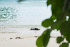 Θολωμένο πράσινο φύλλο καταγράψτε προσαραγμένο στην παραλία και έχει την μπλε θάλασσα είναι β Στοκ εικόνα με δικαίωμα ελεύθερης χρήσης