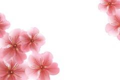 Θολωμένο υπόβαθρο κρητιδογραφιών με τα πέταλα λουλουδιών Στοκ Εικόνες