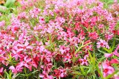 Θολωμένο υπόβαθρο των ρόδινων λουλουδιών Στοκ Φωτογραφίες