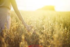 Θολωμένο χέρι σχετικά με τις ακίδες σίτου στο ηλιοβασίλεμα στοκ εικόνες