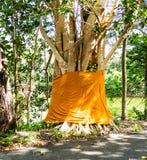 Θρησκεία με το δέντρο Bodhi Στοκ εικόνα με δικαίωμα ελεύθερης χρήσης