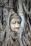 Θρησκεία ταξιδιού του Βούδα βουδισμού ναών Ayutthaya Ταϊλάνδη πόλεων Στοκ εικόνες με δικαίωμα ελεύθερης χρήσης