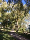 Θυελλώδης ημέρα στο πάρκο Len Ford στο Τορόντο, Οντάριο, Καναδάς Καλοκαίρι 2017 στοκ φωτογραφίες