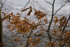 Θυελλώδης ημέρα Στοκ φωτογραφία με δικαίωμα ελεύθερης χρήσης