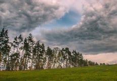 Θυελλώδης και θυελλώδης ημέρα στη δασική βροχή πέρα από το πεύκο Στοκ Εικόνες