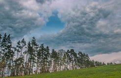 Θυελλώδης και θυελλώδης ημέρα στη δασική βροχή πέρα από το πεύκο Στοκ Εικόνα