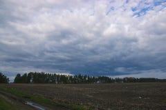 Θυελλώδης και θυελλώδης ημέρα στη δασική βροχή πέρα από το πεύκο Στοκ φωτογραφίες με δικαίωμα ελεύθερης χρήσης