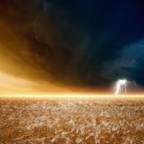 Θυελλώδης ουρανός, ώριμο κριθάρι Στοκ Φωτογραφίες