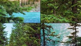 Θυελλώδη δέντρα Montage απόθεμα βίντεο