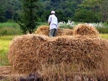 θυμωνιά χόρτου αγροτών Στοκ Εικόνες