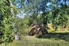 Θυμωνιά χόρτου στην κοπή σε ένα άλσος σημύδων Στοκ φωτογραφίες με δικαίωμα ελεύθερης χρήσης