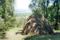 Θυμωνιά χόρτου στην κοπή σε ένα άλσος σημύδων Στοκ Φωτογραφίες