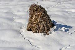Θυμωνιά χόρτου των cornstalks Στοκ εικόνα με δικαίωμα ελεύθερης χρήσης