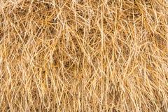 Θυμωνιά χόρτου, sheaf της ξηράς χλόης, σανός, άχυρο, σύσταση, αφηρημένο υπόβαθρο Στοκ Εικόνες