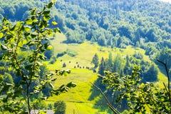 Θυμωνιές χόρτου σε έναν λόφο Στοκ φωτογραφία με δικαίωμα ελεύθερης χρήσης