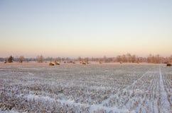 Θυμωνιές χόρτου στο παγωμένο πεδίο Στοκ Φωτογραφία