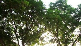 Θόλος δέντρων και κλίση υποβάθρου ουρανού φωτεινότητας επάνω στη μετακίνηση φιλμ μικρού μήκους