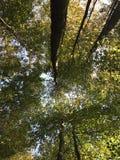Θόλος δέντρων στοκ εικόνες