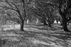 Θόλος δέντρων στην κορυφή λόφων Στοκ Εικόνα