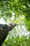 Θόλος δέντρων Στοκ φωτογραφία με δικαίωμα ελεύθερης χρήσης