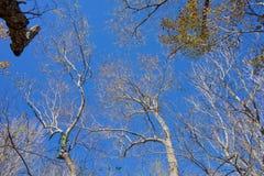 Θόλος δέντρων Στοκ φωτογραφίες με δικαίωμα ελεύθερης χρήσης