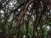 Θόλος δέντρων Στοκ εικόνες με δικαίωμα ελεύθερης χρήσης