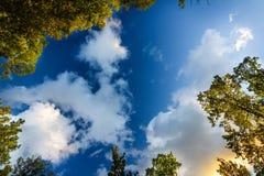 Θόλος των δέντρων που πλαισιώνουν έναν μπλε καλυμμένο ουρανό με την ηλιοφάνεια στο καλαμπόκι Στοκ Εικόνες